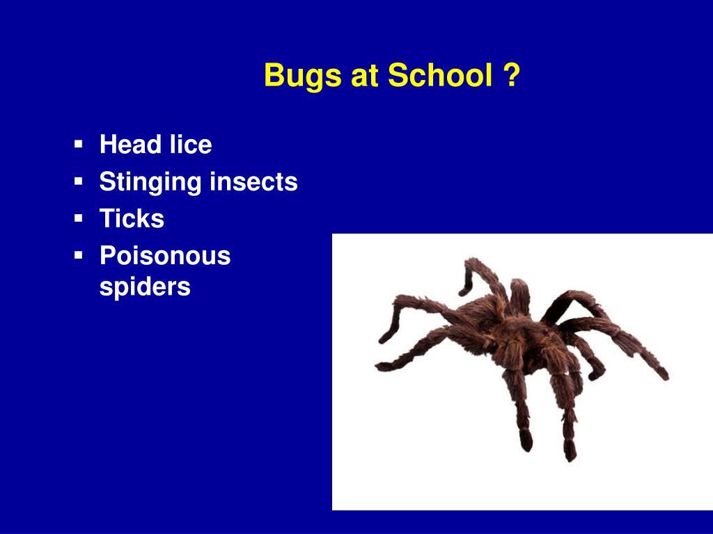 Bugs at School ?
