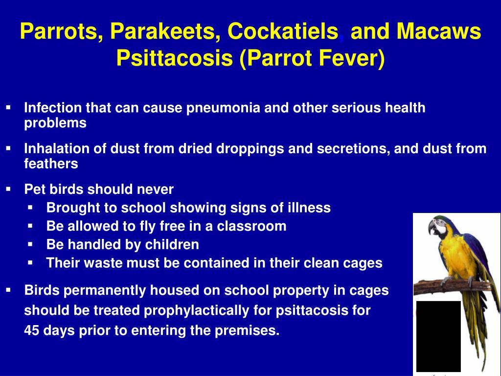 Parrots, Parakeets, Cockatiels