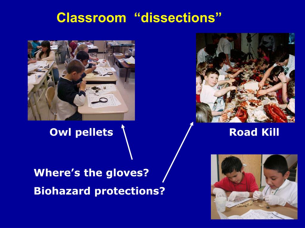 """Classroom  """"dissections"""""""