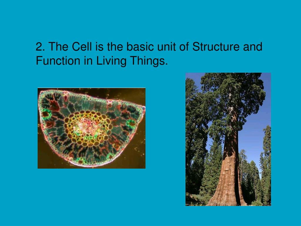 2. The Cell is the basic unit of Structure and Function in Living Things.