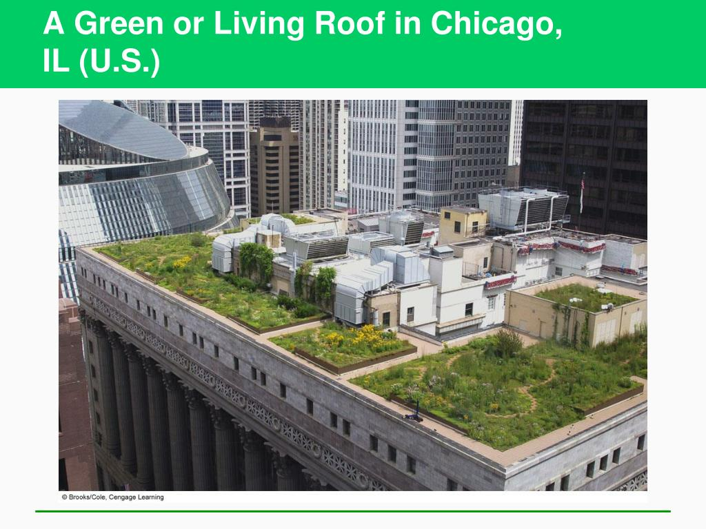 A Green or Living Roof in Chicago,