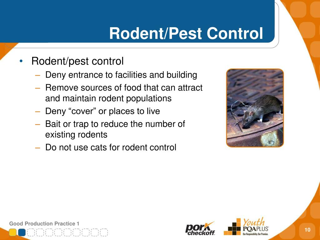 Rodent/Pest Control