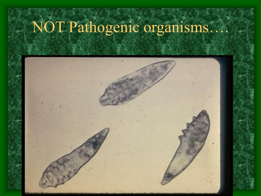 NOT Pathogenic organisms….