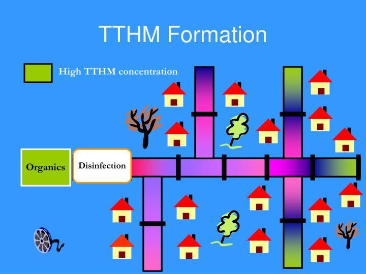 TTHM Formation