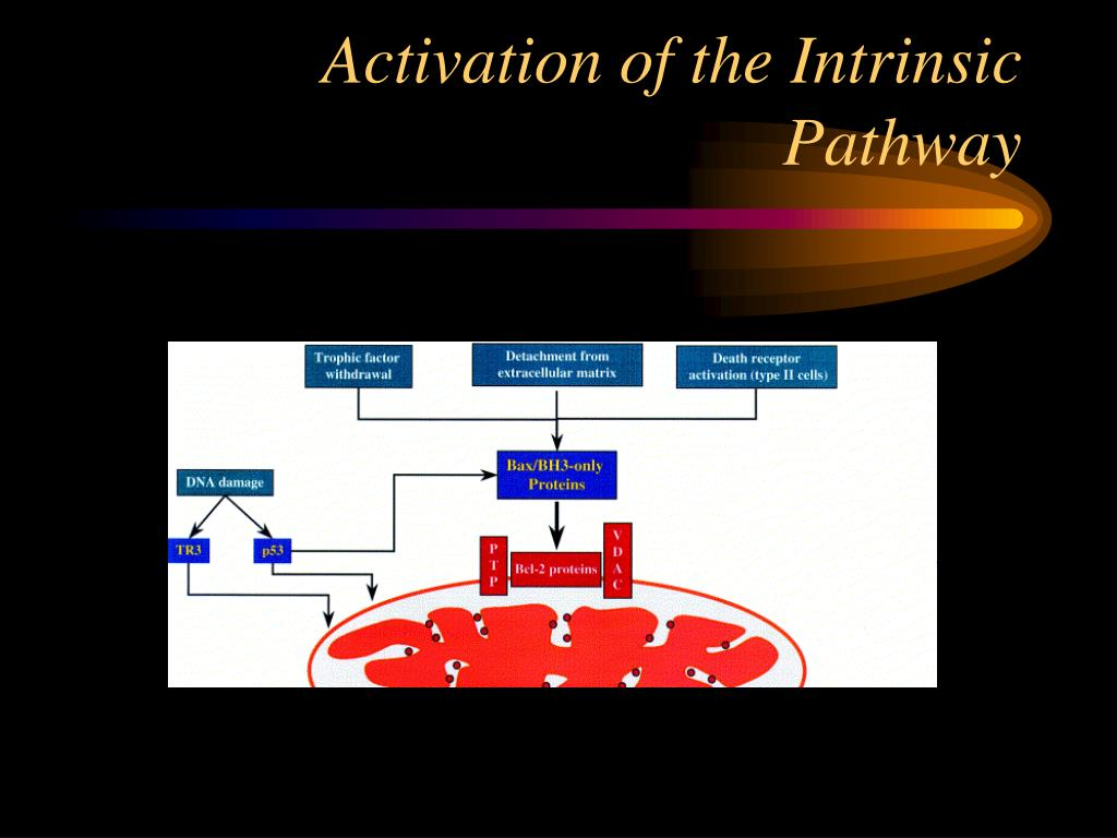Activation of the Intrinsic Pathway