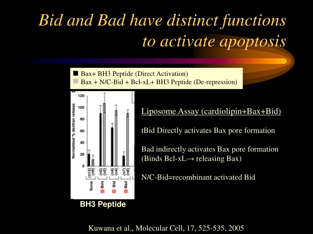 Bax+ BH3 Peptide (Direct Activation)