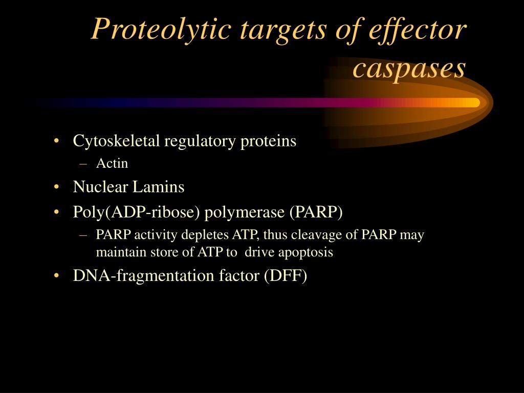 Proteolytic targets of effector caspases