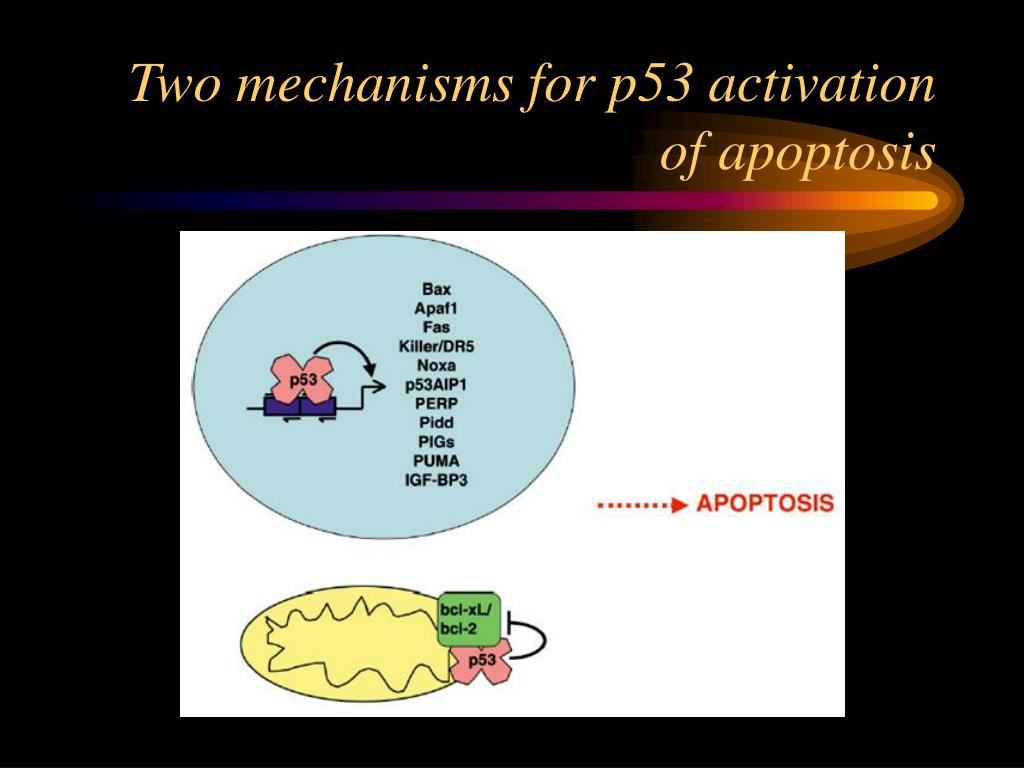 Two mechanisms for p53 activation of apoptosis