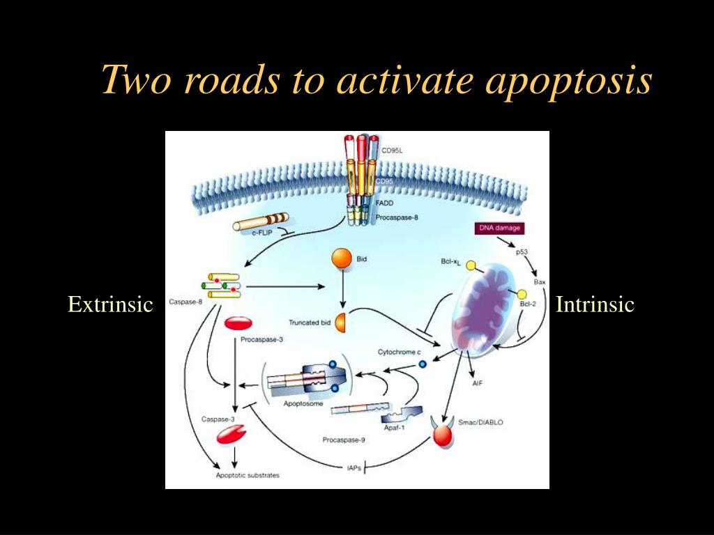 Two roads to activate apoptosis