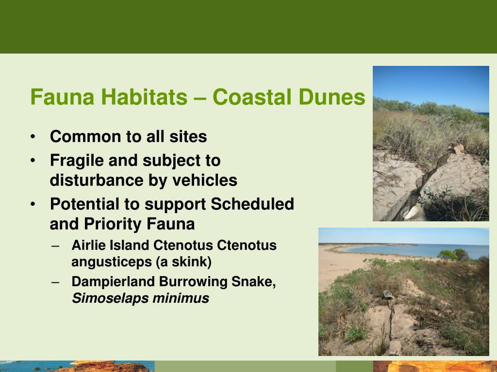 Fauna Habitats – Coastal Dunes