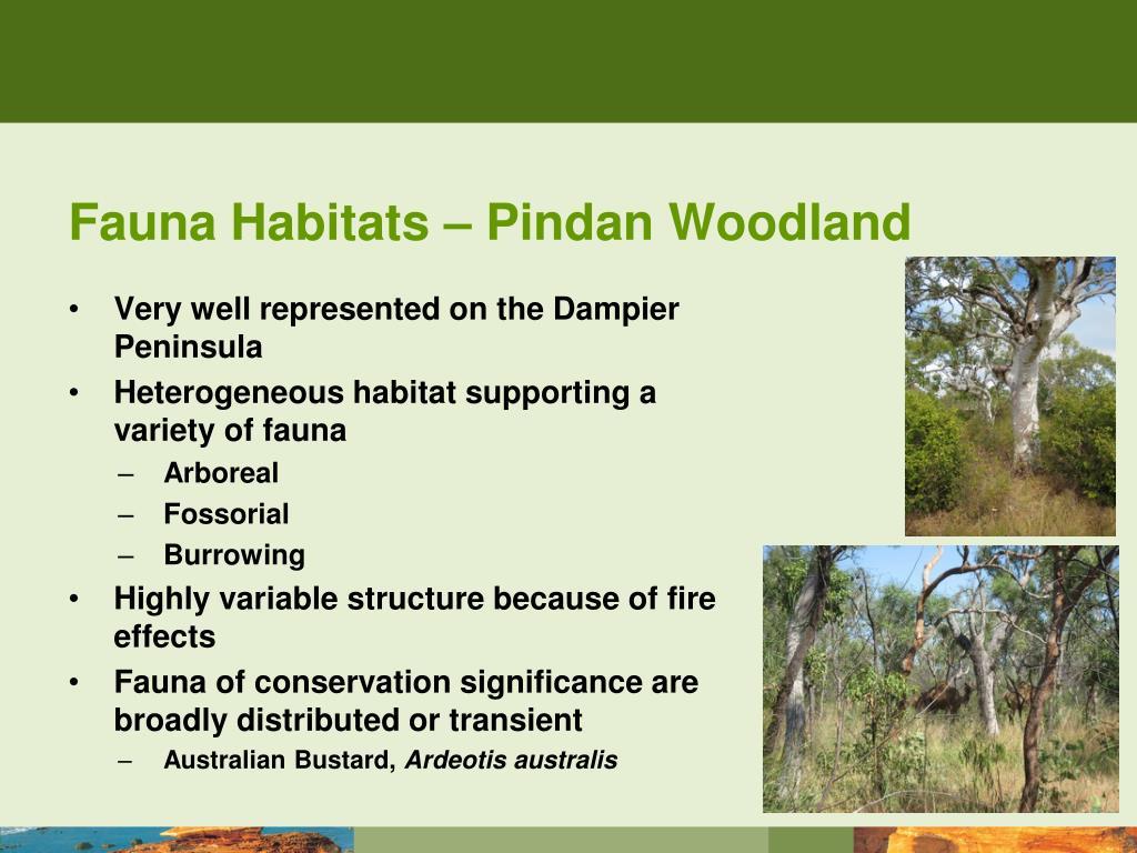 Fauna Habitats – Pindan Woodland