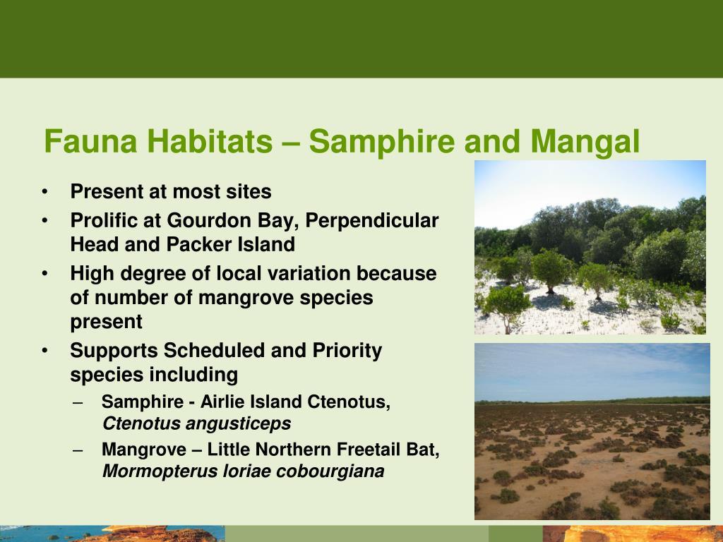 Fauna Habitats – Samphire and Mangal