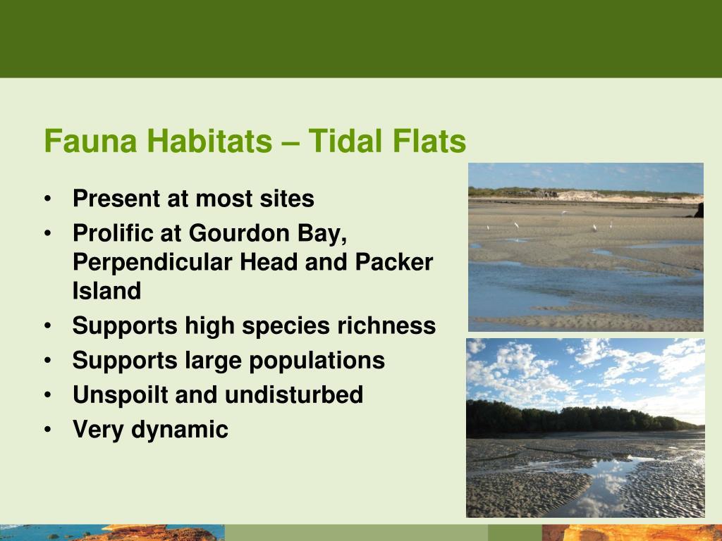 Fauna Habitats – Tidal Flats
