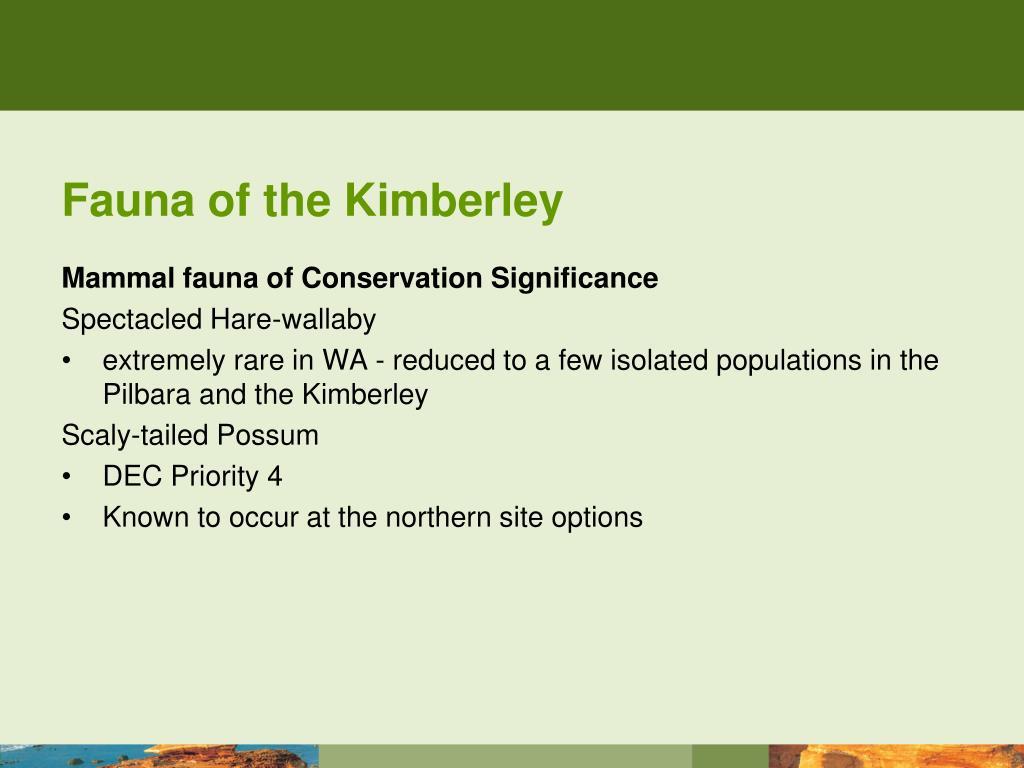 Fauna of the Kimberley
