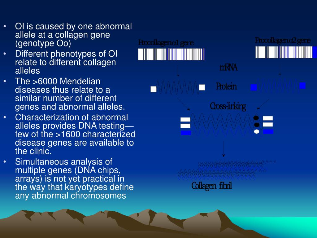 OI is caused by one abnormal allele at a collagen gene (genotype Oo)