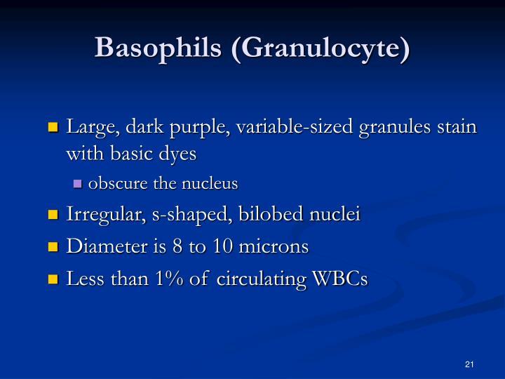 Basophils (Granulocyte)