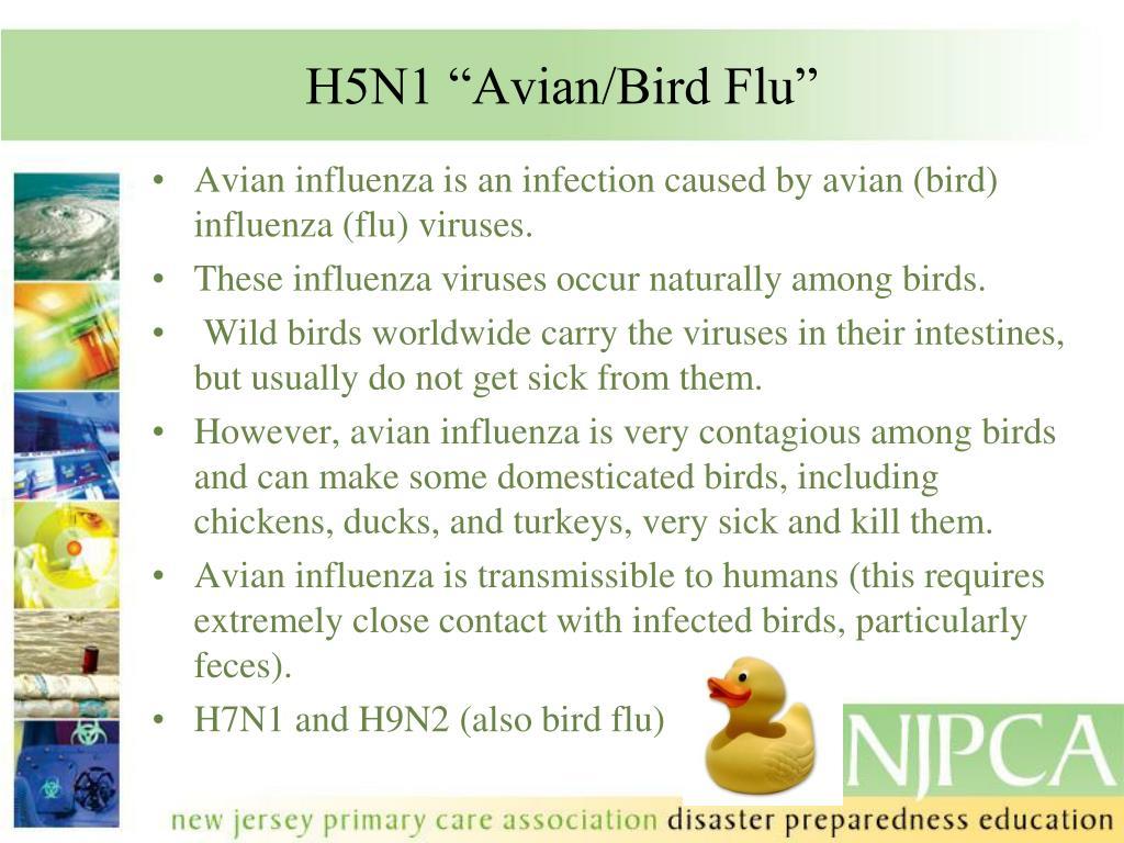 "H5N1 ""Avian/Bird Flu"""