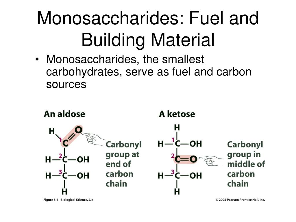 Monosaccharides: Fuel and Building Material
