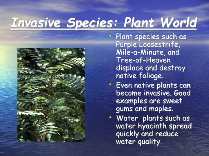 Invasive Species: Plant World