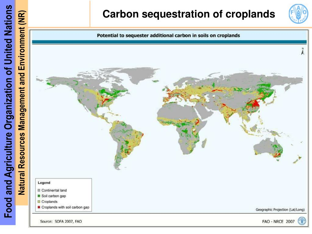 Carbon sequestration of croplands