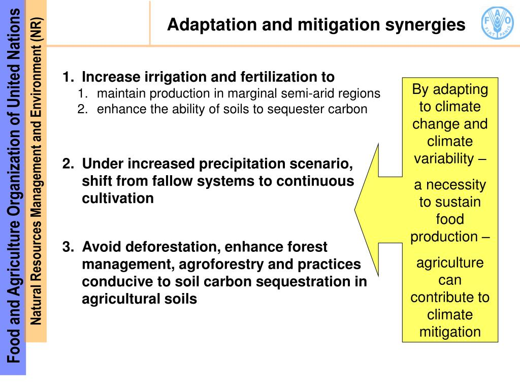 Adaptation and mitigation synergies