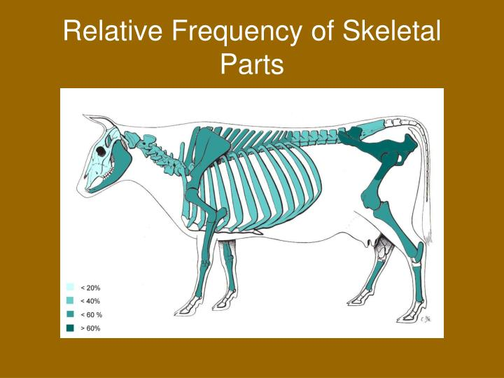 Relative Frequency of Skeletal Parts