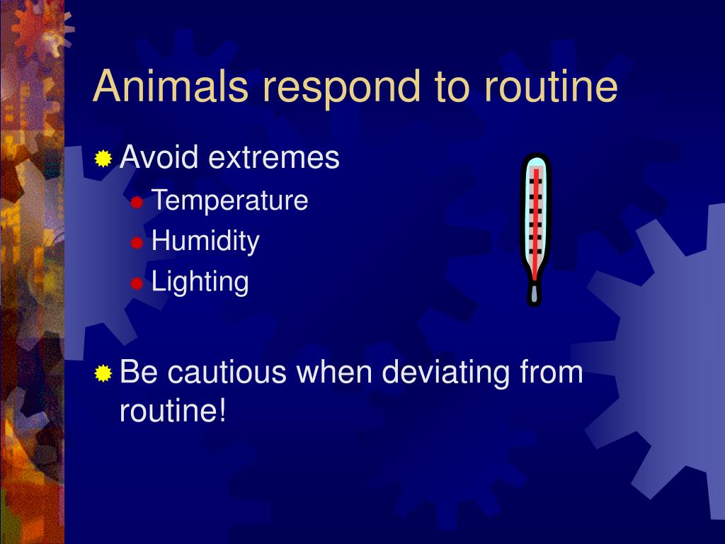 Animals respond to routine