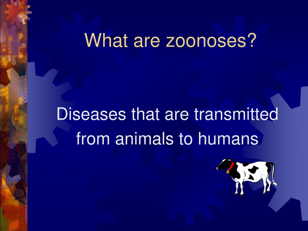 What are zoonoses?