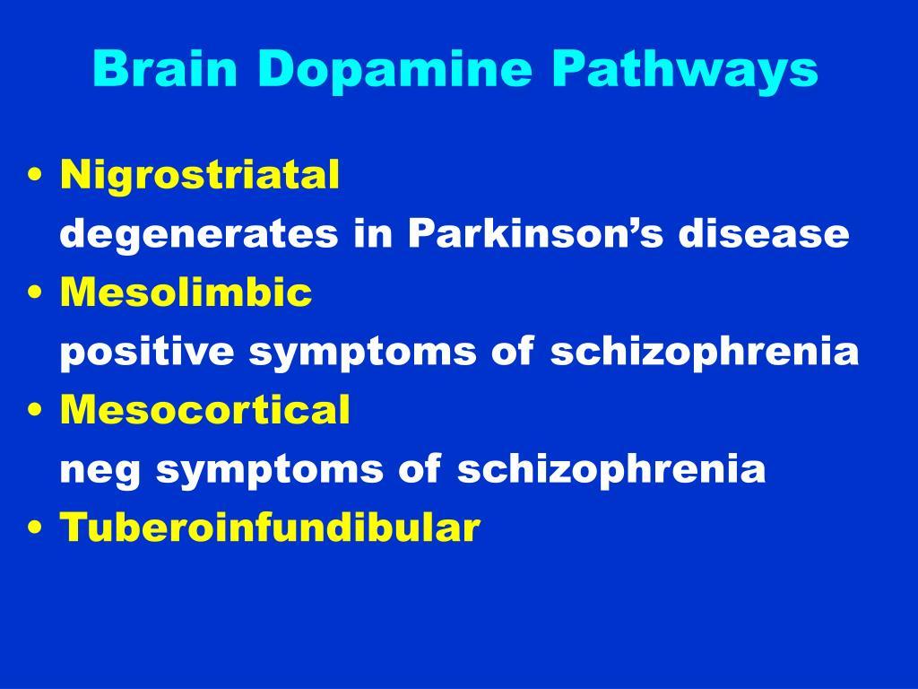 Brain Dopamine Pathways