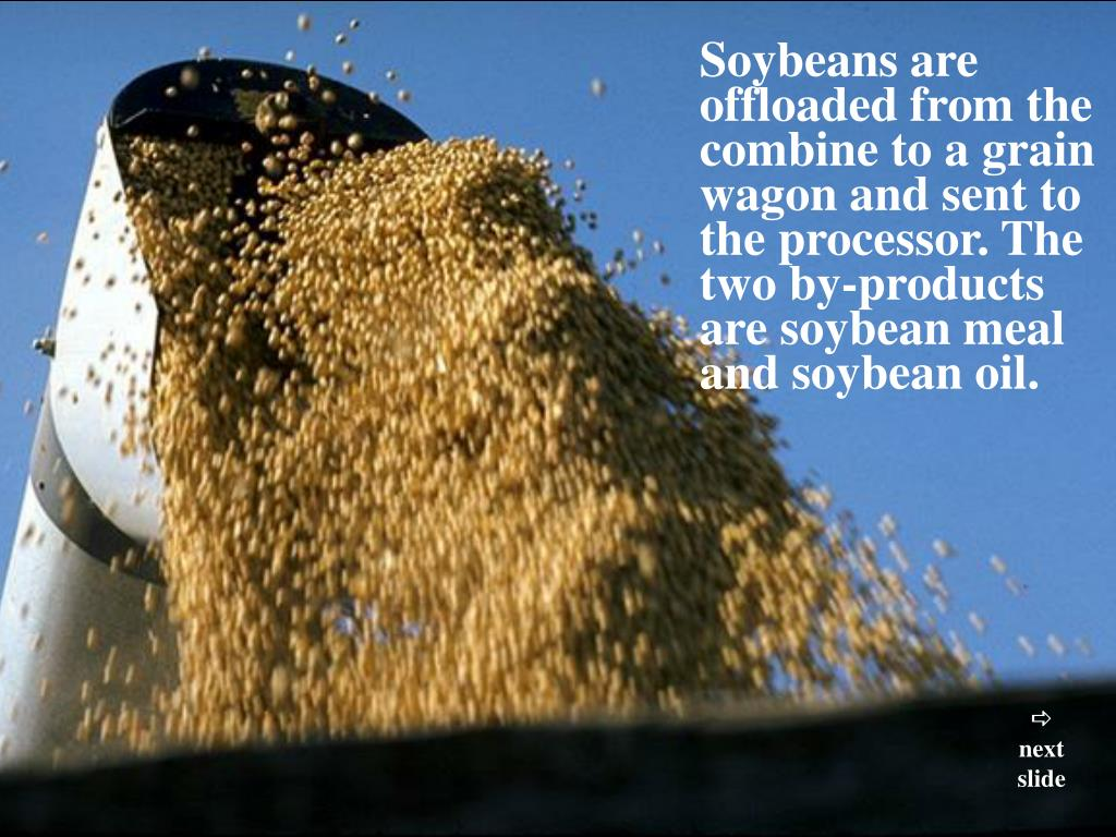 Soybeans are offloaded from the combine to a grain wagon and sent to