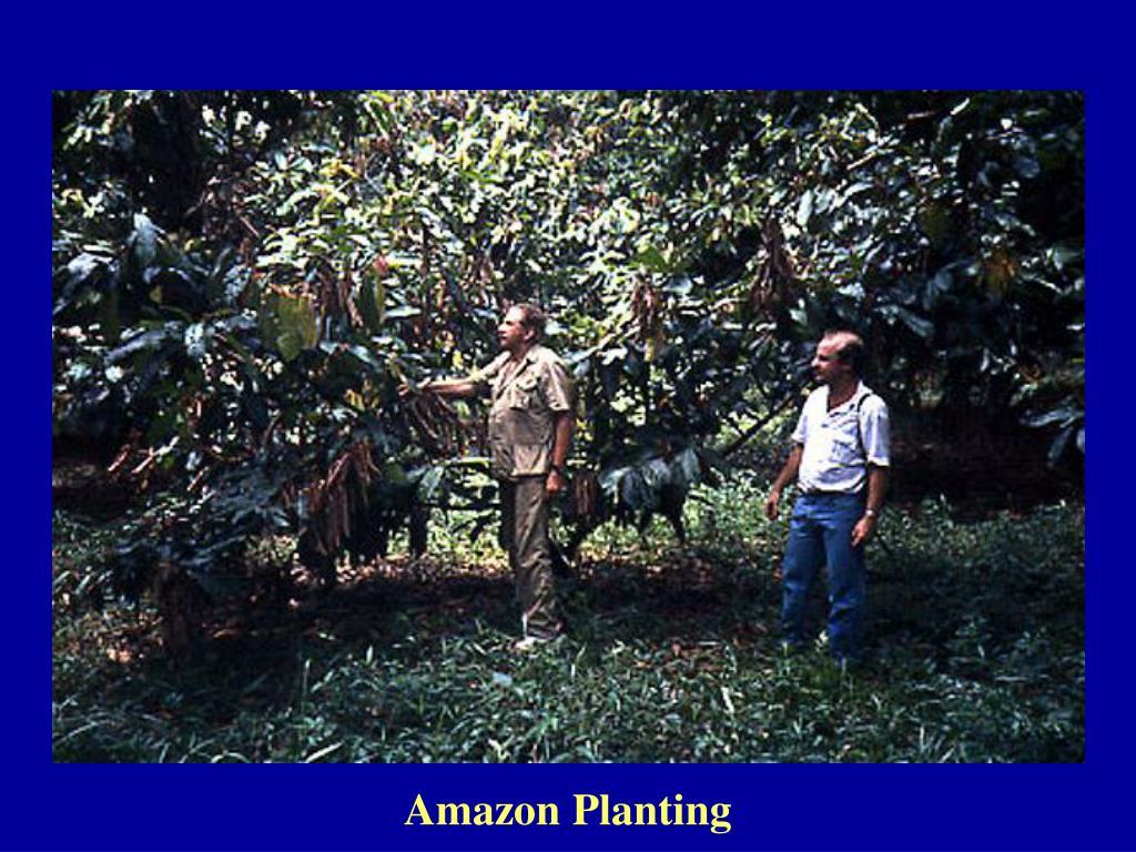 Amazon Planting