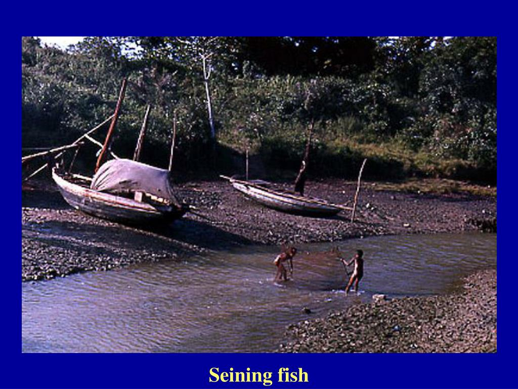 Seining fish