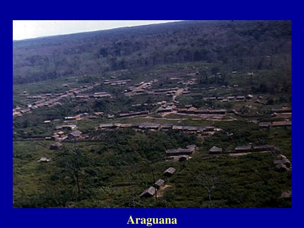 Araguana