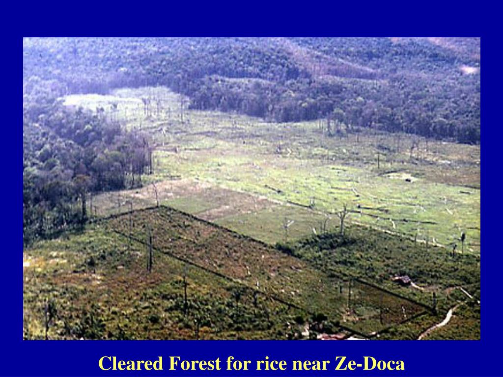 Cleared Forest for rice near Ze-Doca