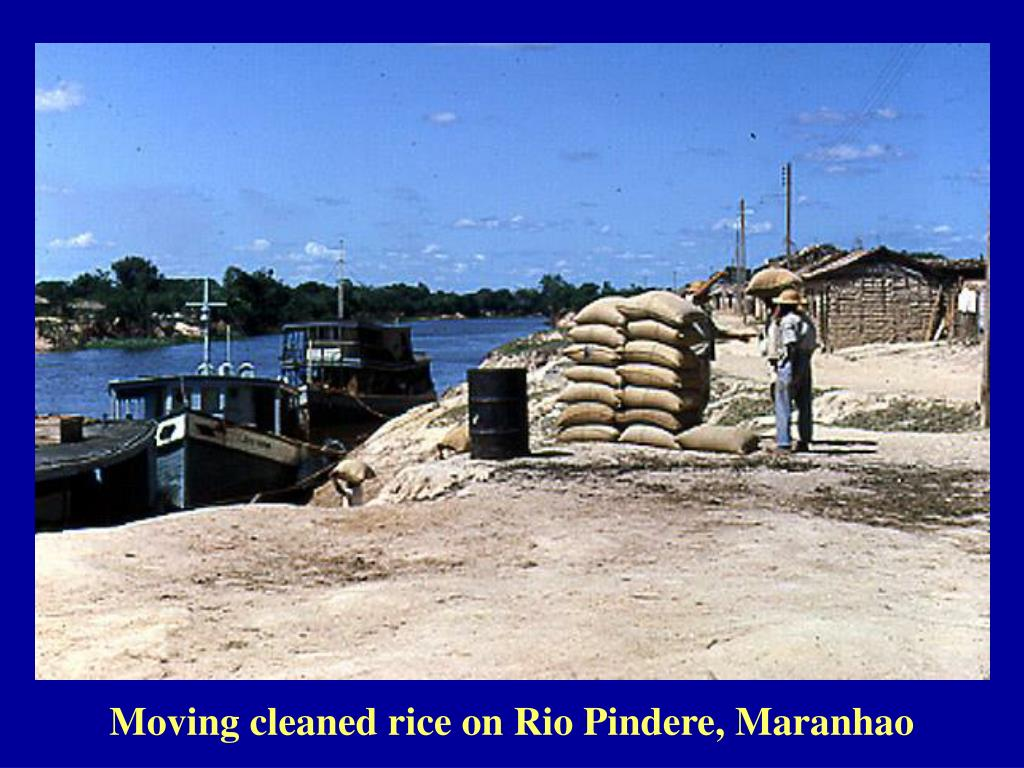 Moving cleaned rice on Rio Pindere, Maranhao