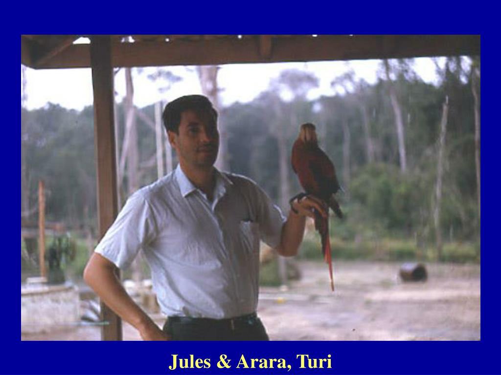 Jules & Arara, Turi