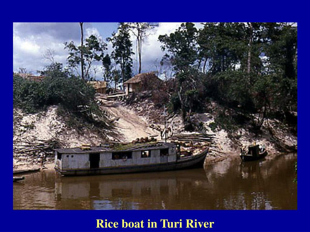 Rice boat in Turi River