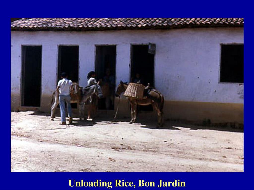 Unloading Rice, Bon Jardin