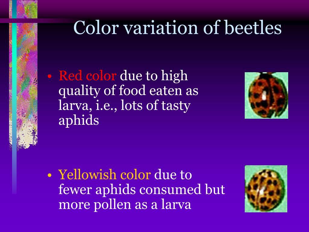 Color variation of beetles