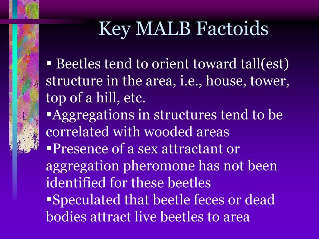 Key MALB Factoids