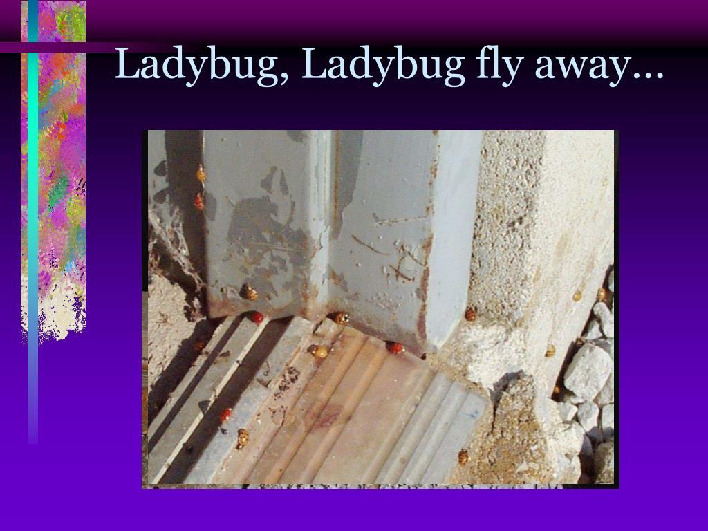 Ladybug, Ladybug fly away…