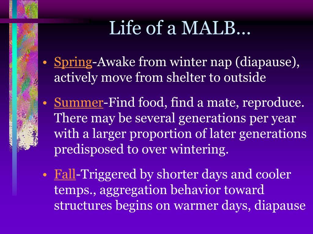 Life of a MALB…