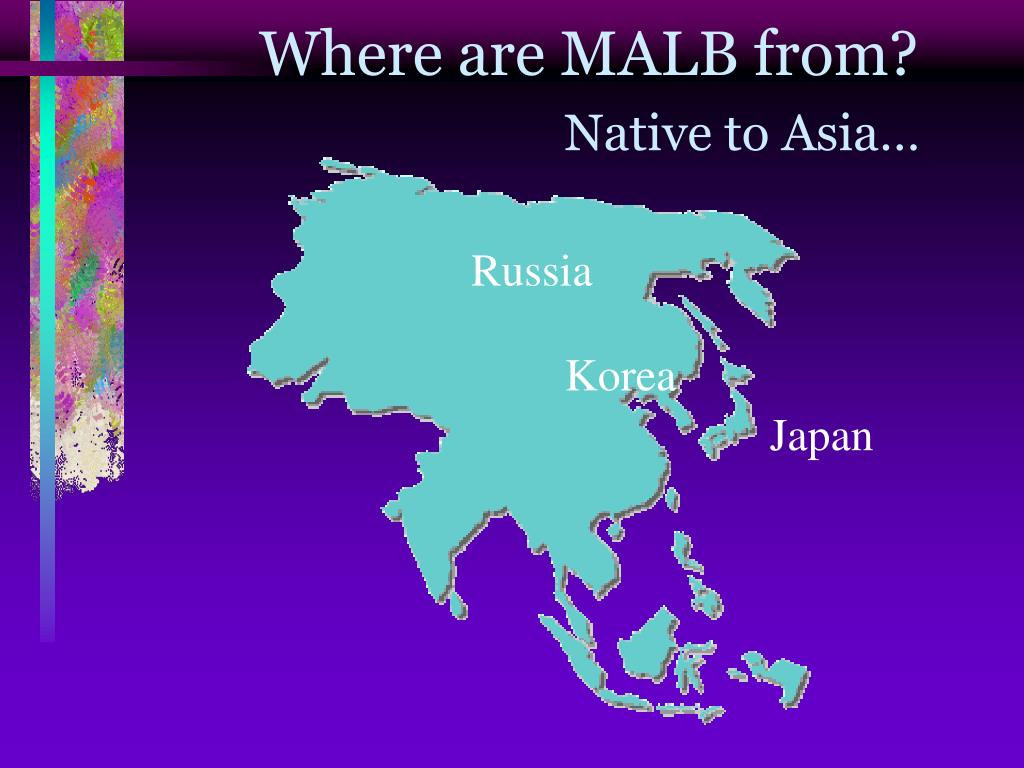 Where are MALB from?