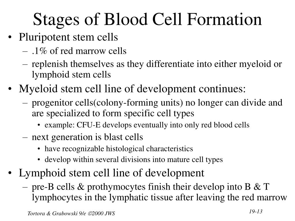 Stages of Blood Cell Formation