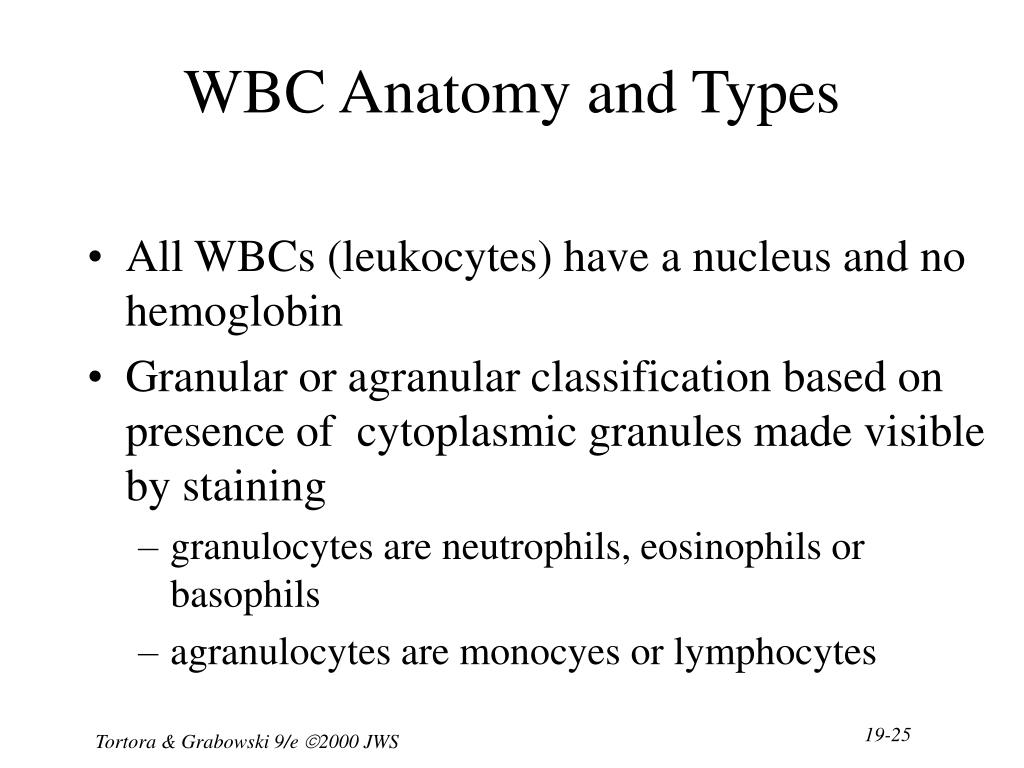 WBC Anatomy and Types
