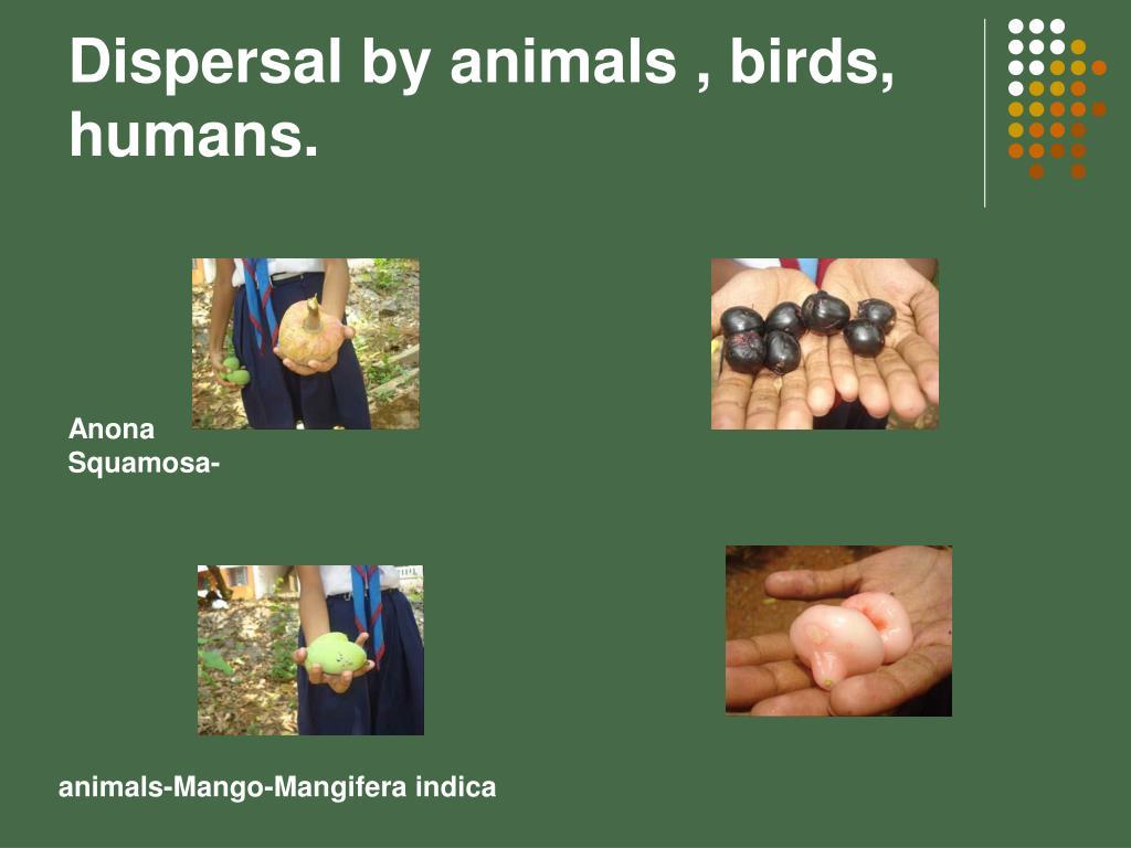 Dispersal by animals , birds, humans.
