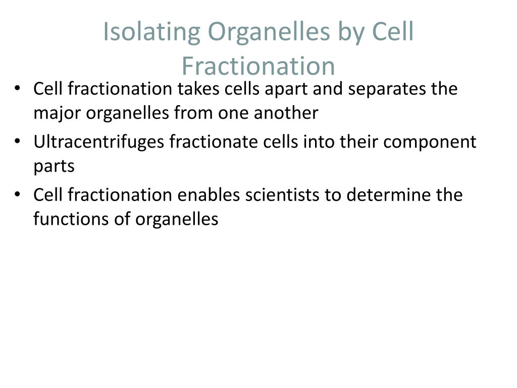 Isolating Organelles by Cell Fractionation