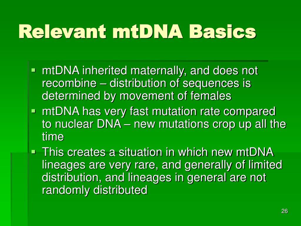 Relevant mtDNA Basics