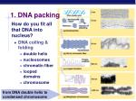 1 dna packing