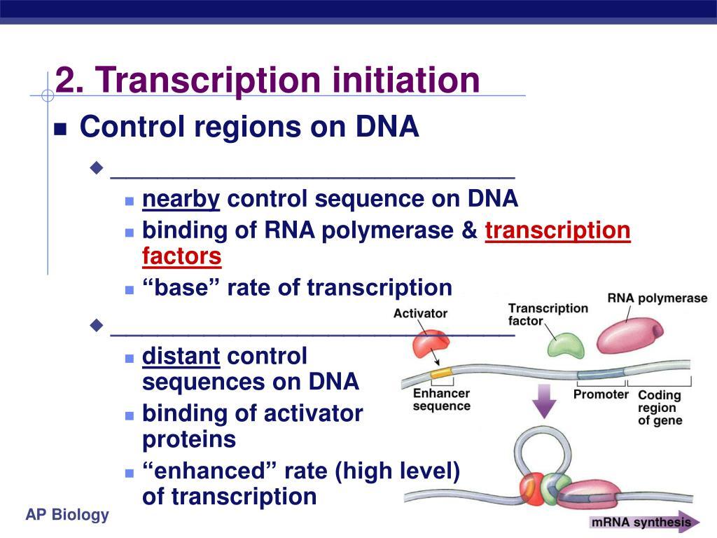 2. Transcription initiation